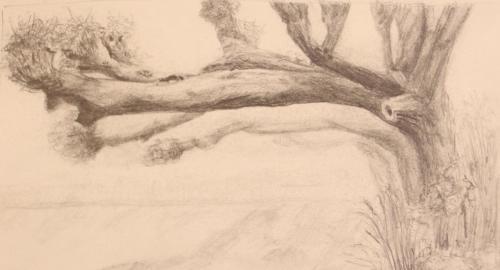 Tekening oude bomen