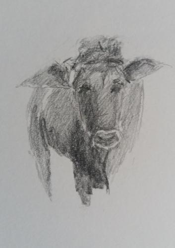 Koe, potlood op papier, 20 x 15 cm, 2020, € 125,00